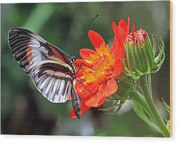 Butterfly - Orange Wood Print by Larry Nieland