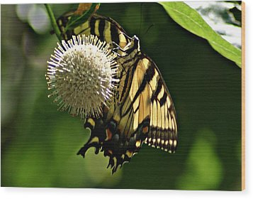 Butterfly 2 Wood Print by Joe Faherty