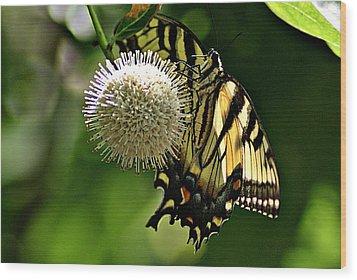 Butterfly 3 Wood Print by Joe Faherty