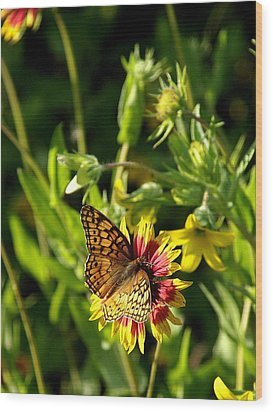 Butterfly And Blankets I Wood Print by James Granberry