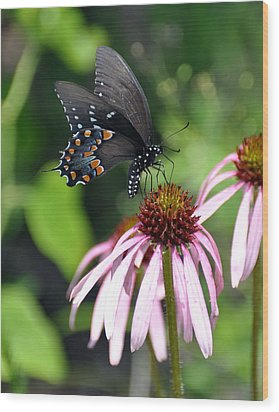 Butterfly And Coine Flower Wood Print by Marty Koch