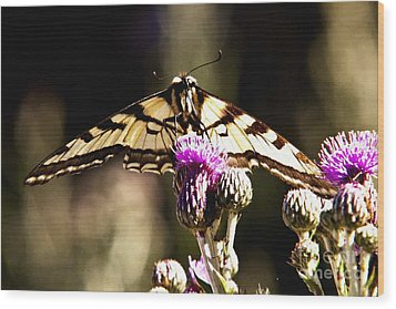 Butterfly And Thistle Wood Print by Angelique Olin