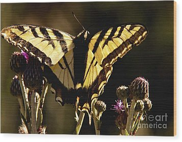Wood Print featuring the photograph Butterfly And Thistle II by Angelique Olin