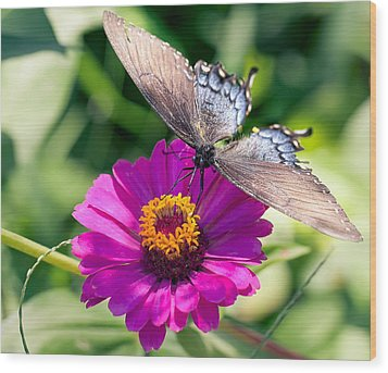 Wood Print featuring the photograph Butterfly  by Anna Rumiantseva