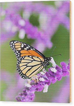 Butterfly Beauty Wood Print by Elizabeth Budd