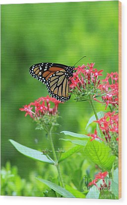 Wood Print featuring the photograph Butterfly Beauty by Laurinda Bowling