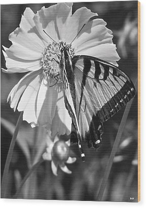 Butterfly Collection Black White Wood Print by Debra     Vatalaro