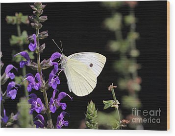Wood Print featuring the photograph Butterfly by Denise Pohl