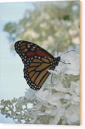 Butterfly Dreams II Wood Print by Terry Eve Tanner