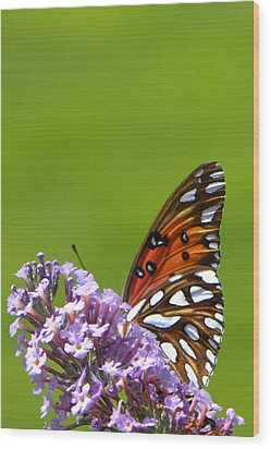 Wood Print featuring the photograph Butterfly From Below by George Bostian