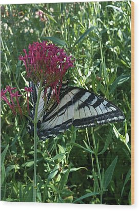 Wood Print featuring the photograph Butterfly Garden by Jeremiah Colley
