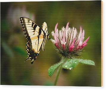 Wood Print featuring the photograph Butterfly by Gary Rose