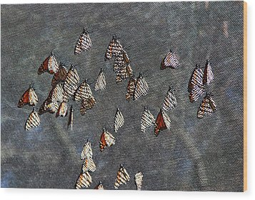 Wood Print featuring the photograph Butterfly Gathering by Tam Ryan