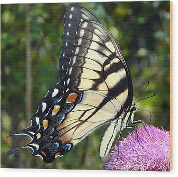 Butterfly Harvest II Wood Print by Sheri McLeroy