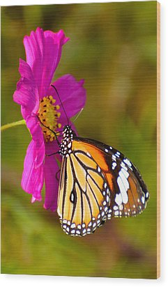 Butterfly II Wood Print by Fotosas Photography