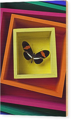 Butterfly In Box Wood Print by Garry Gay