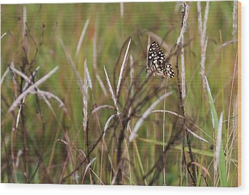 Wood Print featuring the photograph Butterfly In Flight by Fotosas Photography