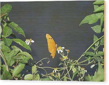 Wood Print featuring the photograph Butterfly by Jerry Cahill