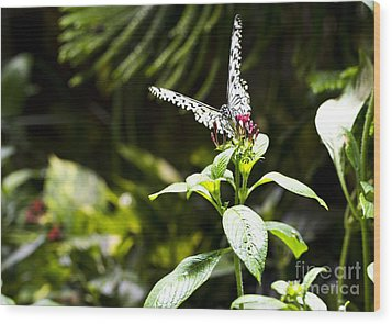 Butterfly Kisses Wood Print by Leslie Leda