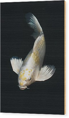 Butterfly Koi Wood Print by Don Mann