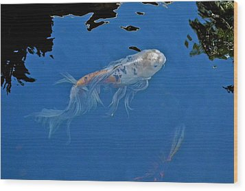 Butterfly Koi In Blue Sky Reflection Wood Print by Kirsten Giving