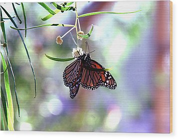 Wood Print featuring the photograph Butterfly Meet-up by Tam Ryan