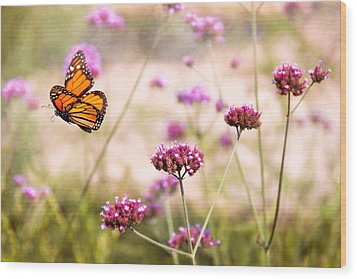 Butterfly - Monarach - The Sweet Life Wood Print by Mike Savad