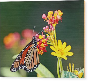 Wood Print featuring the photograph Butterfly Monarch On Lantana Flower by Luana K Perez