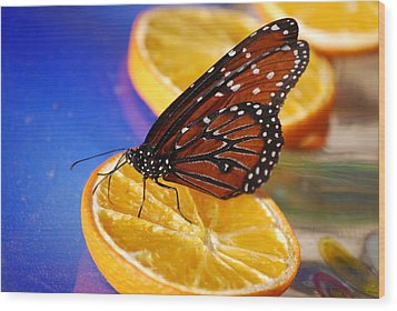 Wood Print featuring the photograph Butterfly Nectar by Tam Ryan