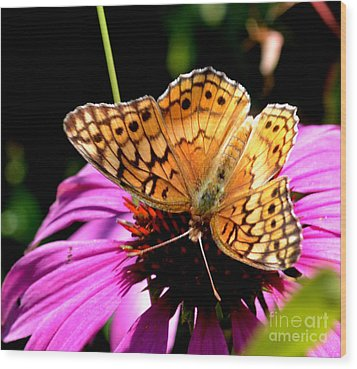 Butterfly On Coneflower-05 Wood Print by Eva Thomas