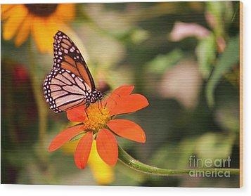 Butterfly On Flower 1 Wood Print by Artie Wallace