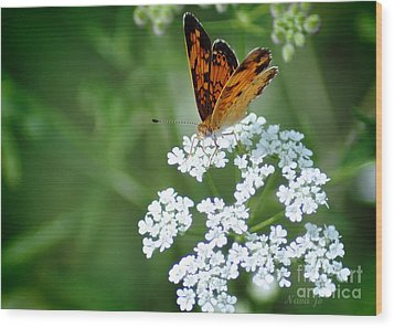 Butterfly On Lacy Wildflower Wood Print by Nava Thompson