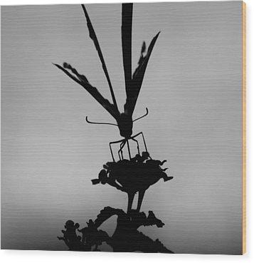 Butterfly On Lantana Bw Wood Print
