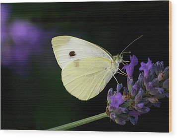 Butterfly On Lavender Flower Wood Print by Annfrau