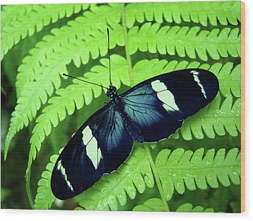 Butterfly On Leaf. Wood Print by Kryssia Campos