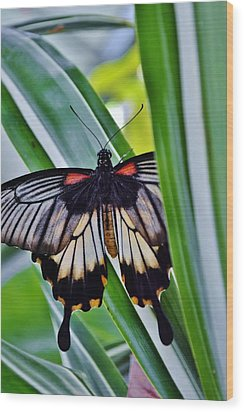 Wood Print featuring the photograph Butterfly On Leaf by Werner Lehmann