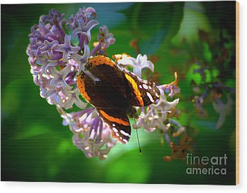 Butterfly On Lilac Wood Print by Kevin Fortier