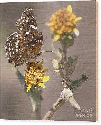 Wood Print featuring the digital art Butterfly On Marigold 1 by John  Kolenberg