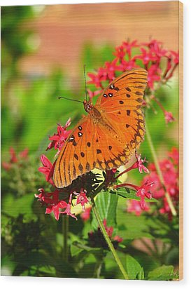 Wood Print featuring the photograph Butterfly On Pentas by Carla Parris