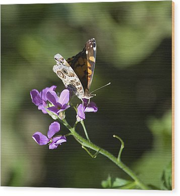 Butterfly On Phlox Bloom Wood Print by Sarah McKoy