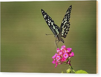 Wood Print featuring the digital art Butterfly On Pink Flower  by Ramabhadran Thirupattur