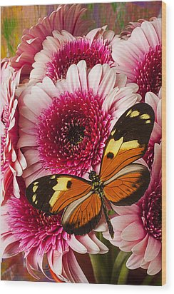 Butterfly On Pink Mum Wood Print by Garry Gay