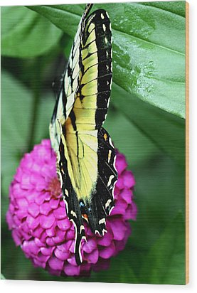 Butterfly On Pink Wood Print by Susan Leggett