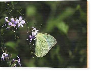 Wood Print featuring the photograph Butterfly On Purple Flower by Ramabhadran Thirupattur