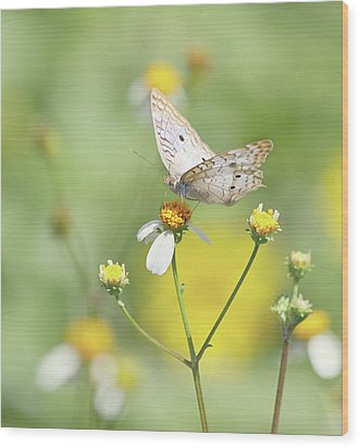 Butterfly On Wildflower Wood Print by Kim Hojnacki