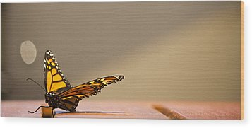 Butterfly Wood Print by Paul Robb