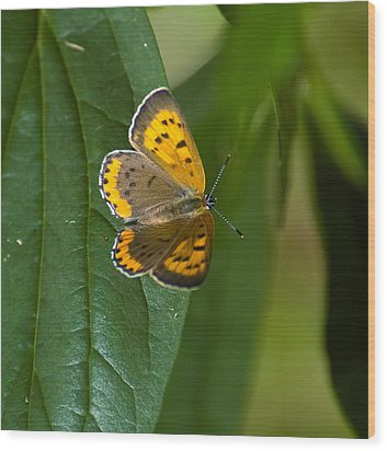 Butterfly Pose Wood Print by Sarah McKoy