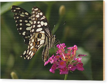 Wood Print featuring the photograph Butterfly by Ramabhadran Thirupattur