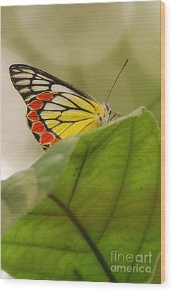 Wood Print featuring the photograph Butterfly Resting by Fotosas Photography