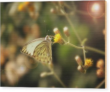 Butterfly Wood Print by Sergey Nassyrov